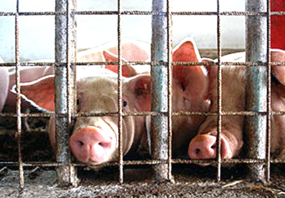 How Factory Farming Contributes to Global Warming