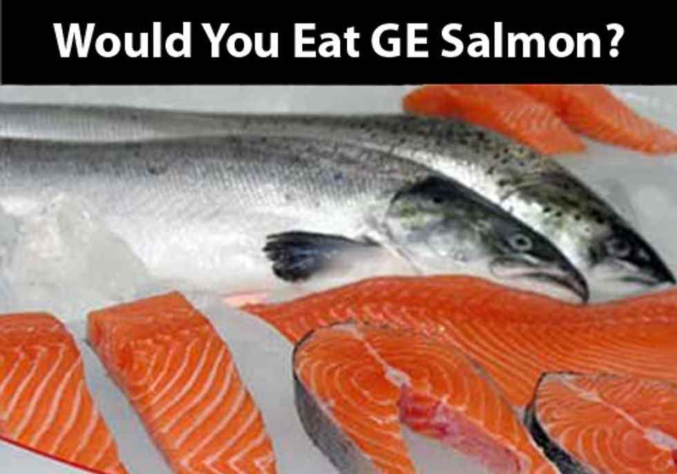 FDA Extends Comment Period for GE Salmon