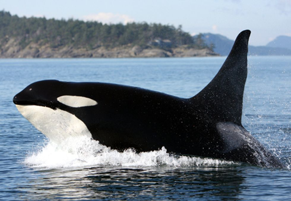 A Deadly Mix: Whales and Sonar