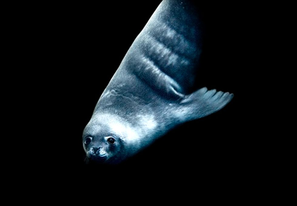 The Last Ocean: Have You Heard of Toothfish?