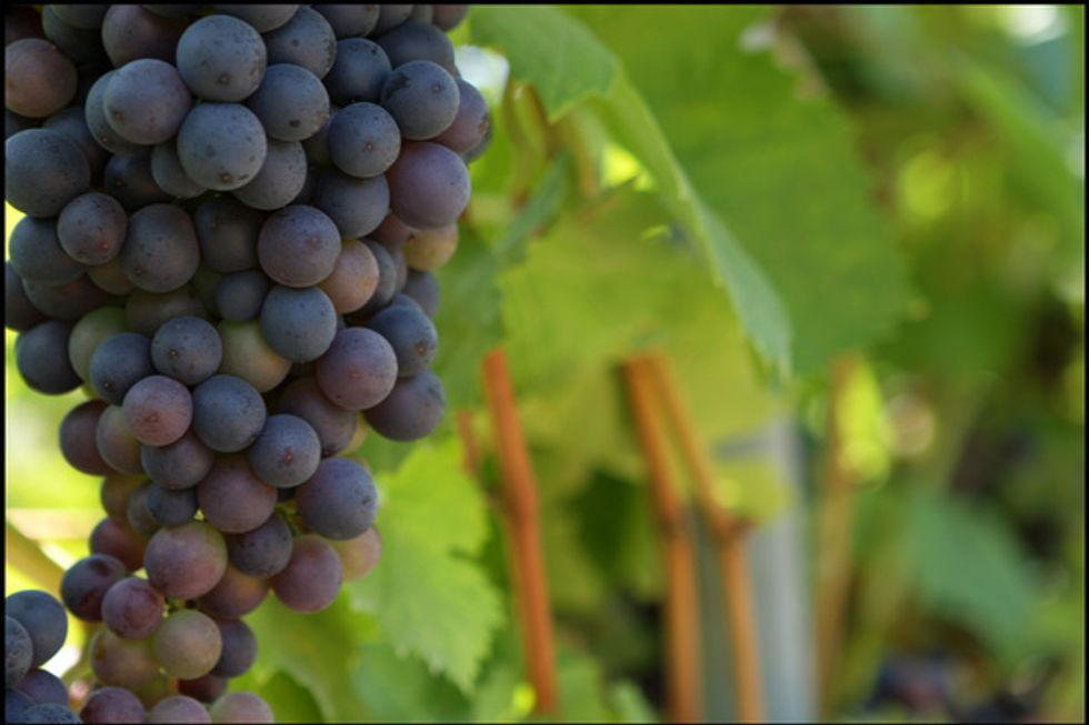 Climate Change Puts the Squeeze on Wine Production