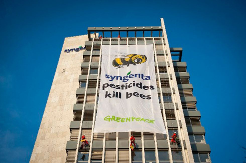 Greenpeace: Syngenta Pesticides Kill Bees