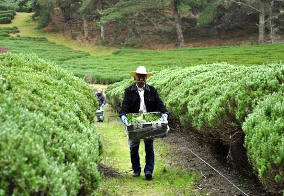Growing Green Awards: How Organic Farming Promotes a Sustainable Economy