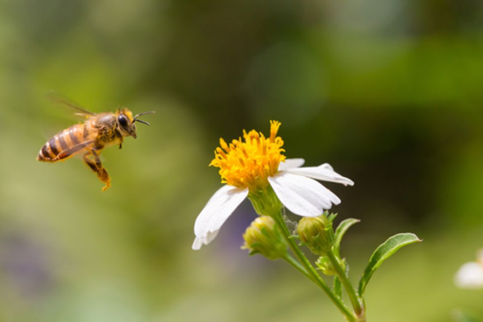 EPA Approves New Pesticide Highly Toxic to Bees
