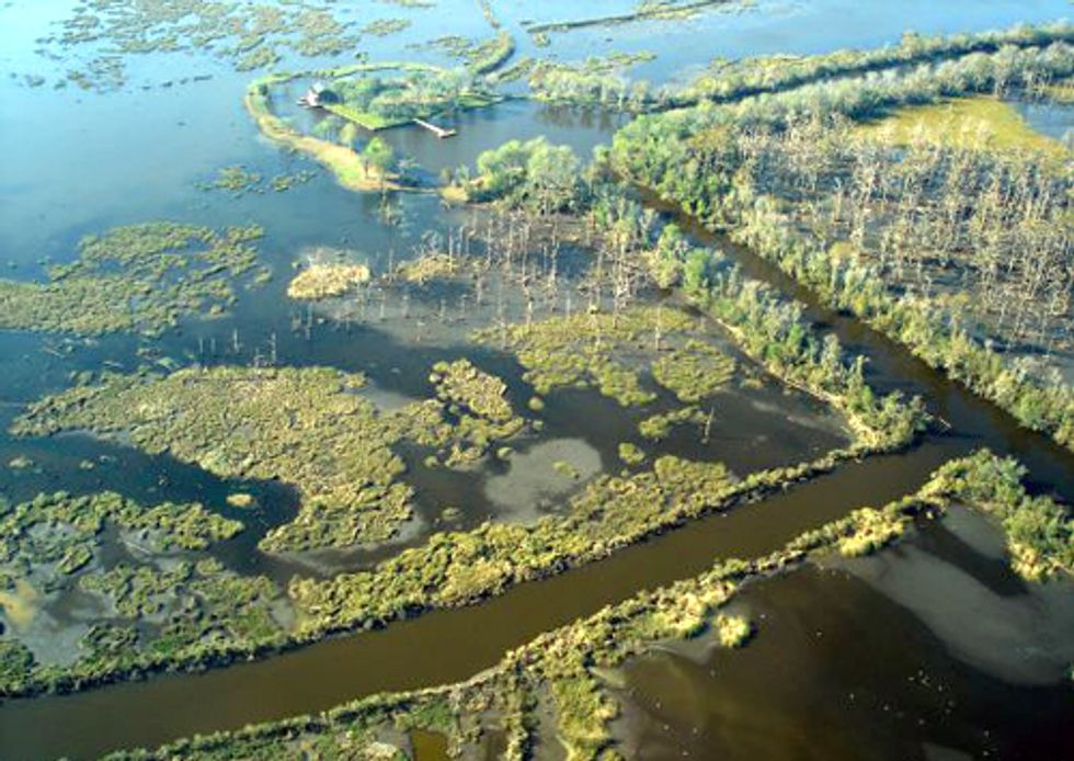 BP Deepwater Horizon Spill Accelerated Erosion Rate of Louisiana Marshes