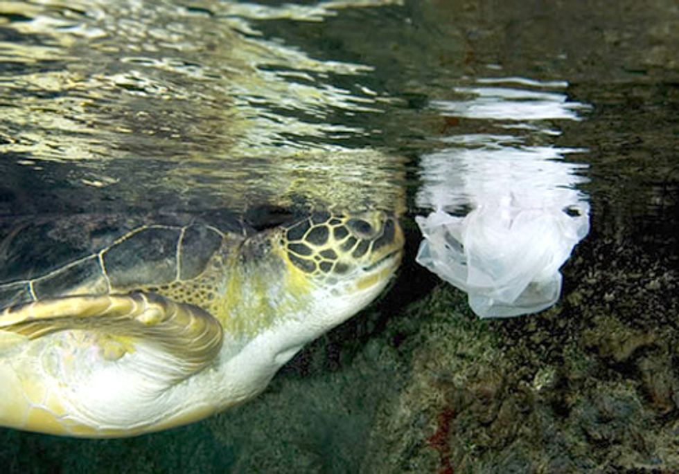European Union Can't Blow Opportunity to Set Strong Marine Litter Targets