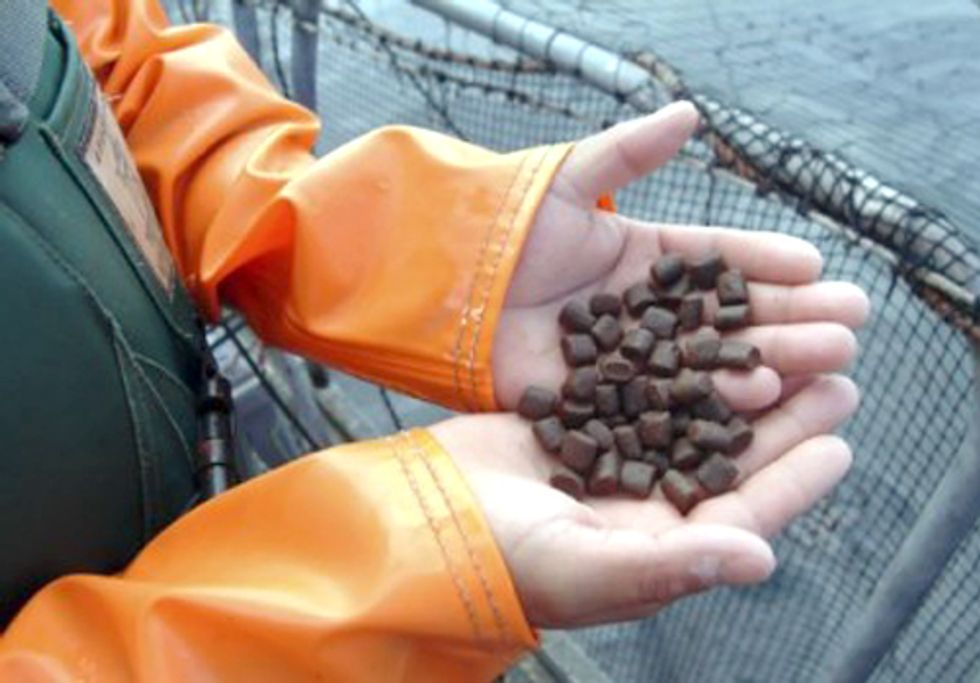 Monsanto and Cargill Aggressively Pursue GE Soy Feed for Factory Fish-Farming Industry