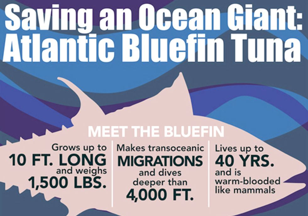 Show Your Support for Atlantic Bluefin Tuna by July 15