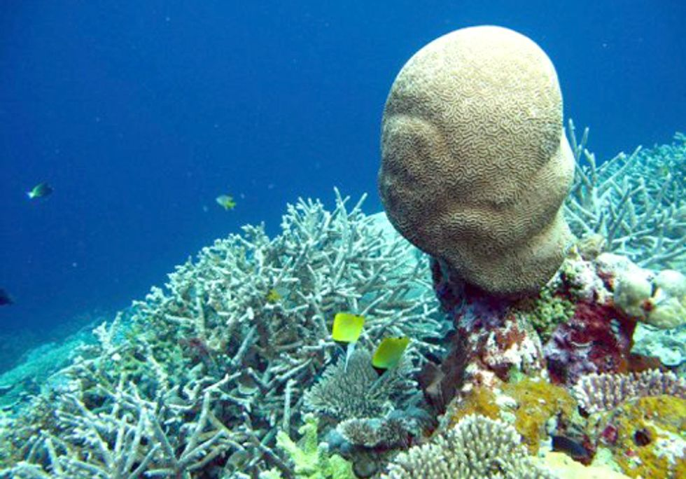 Eighty-Five Percent of Reefs in the Coral Triangle Are Threatened by Human Activities