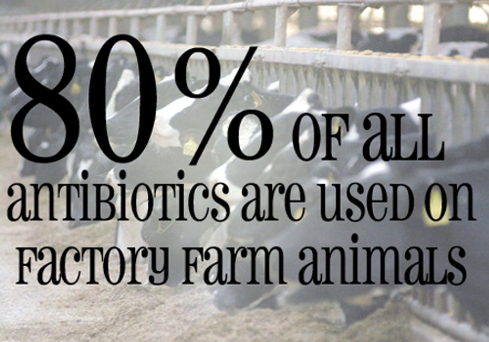 Tell the FDA: No Antibiotics in Our Food