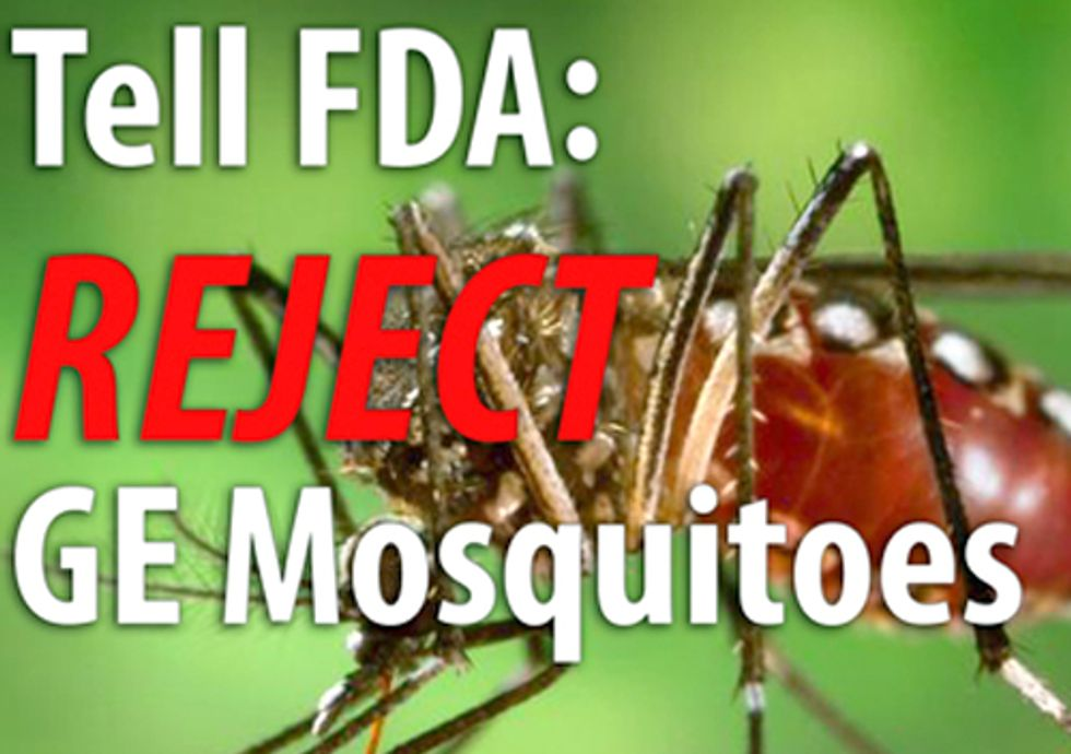 Opposition to Genetically Engineered Mosquito Heats Up