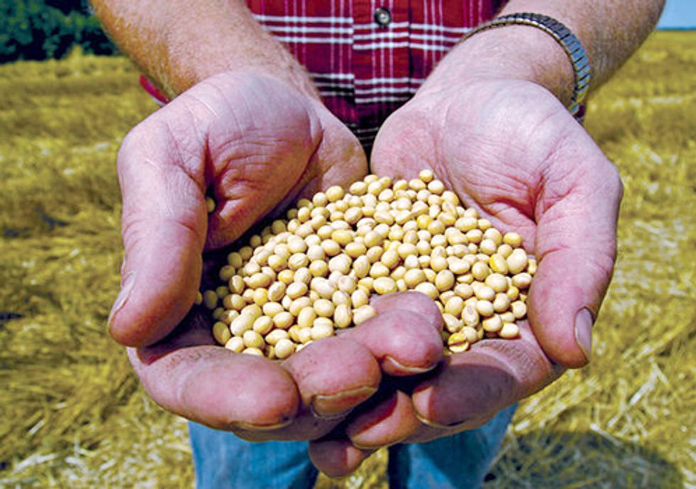 Briefs Filed to Stop Monsanto's Patent Infringement War against Family Farmers