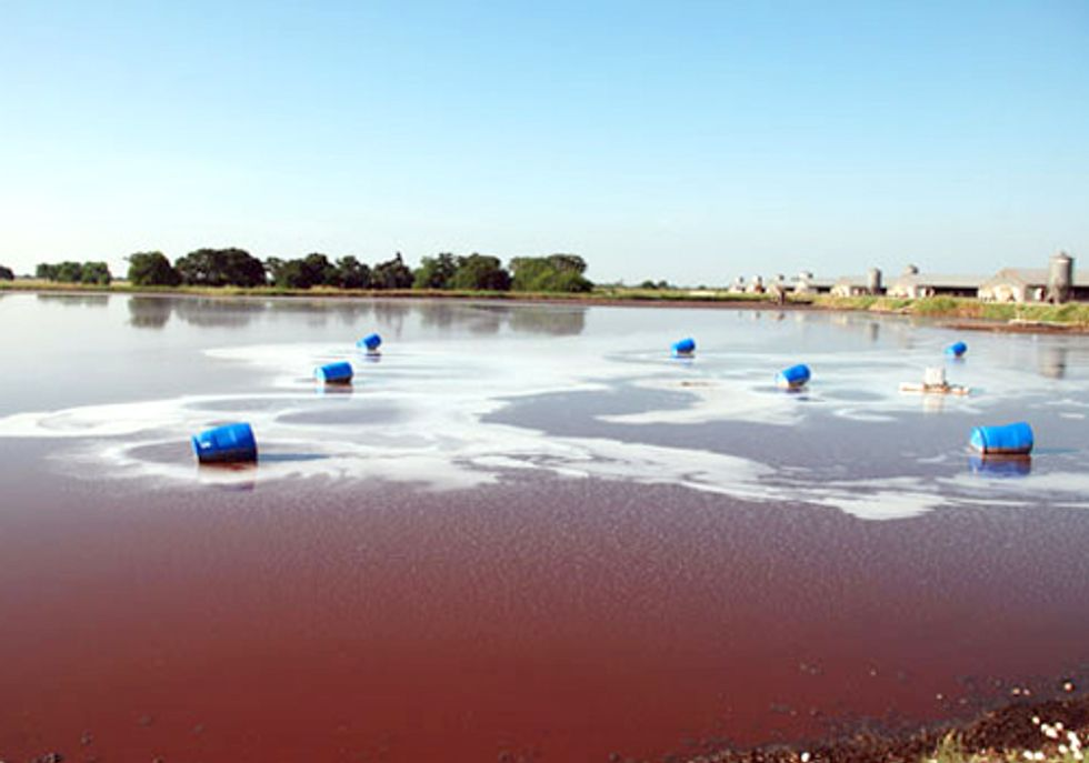EPA Withdraws Proposed Clean Water Act Regulation Requiring CAFOs to Manage Waste