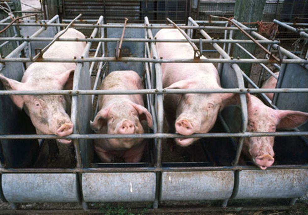 250,000 Demand Tyson Foods Stop Using Gestation Crates