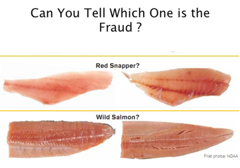 Oceana Confirms Rampant Seafood Mislabeling in Florida