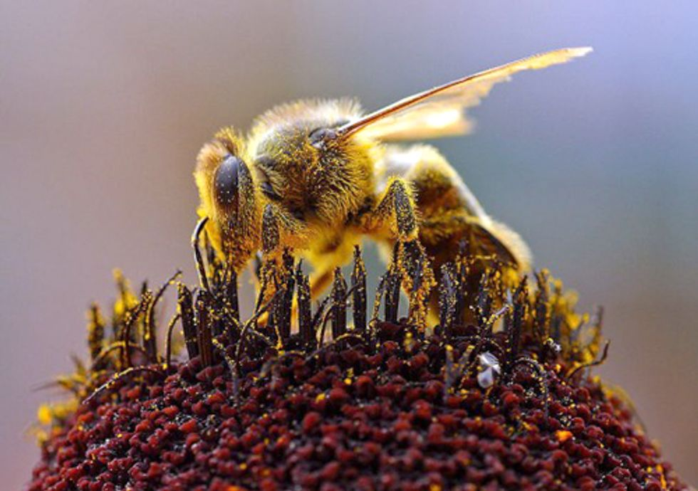 EPA Tells Beekeepers to Buzz off Despite Chronic Bee Kills Linked to Pesticides