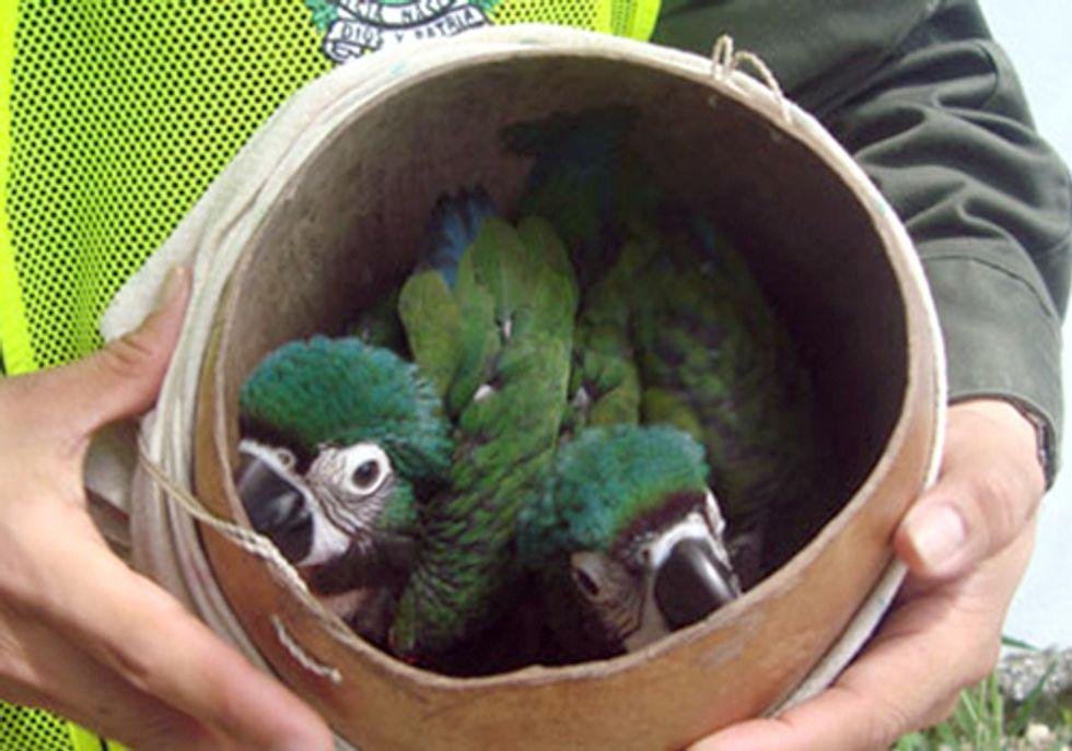 Thousands Arrested in Global Crackdown of Black Market Bird Trade