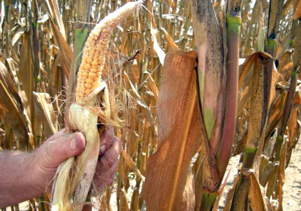 Severe Drought Shows Stupidity of Corn Ethanol Mandate