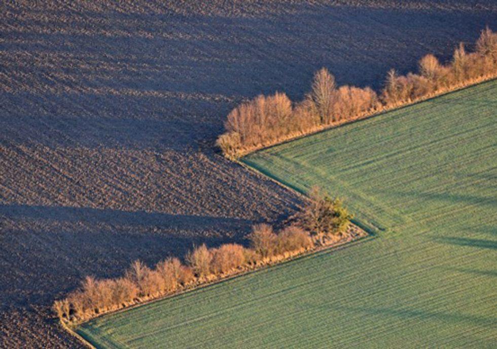 How Crop Subsidies Contribute to Massive Habitat Losses