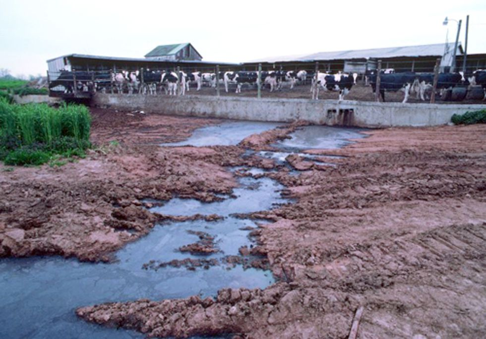 FACTORY FARMING SERIES PART III: Animal Waste, Waterways and Drinking Water
