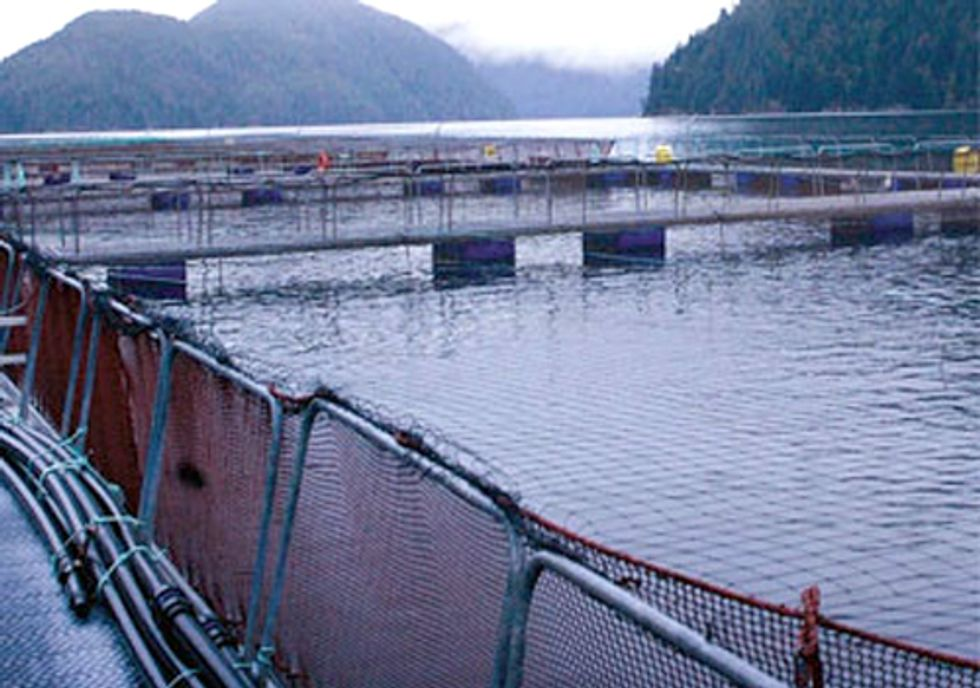 Deadly Virus Outbreak Shows Need for Open-Net Salmon Farm Reform