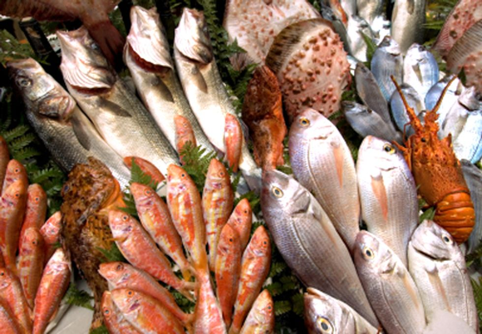 World's Insatiable Appetite for Fish Decimates Wild Fish Population