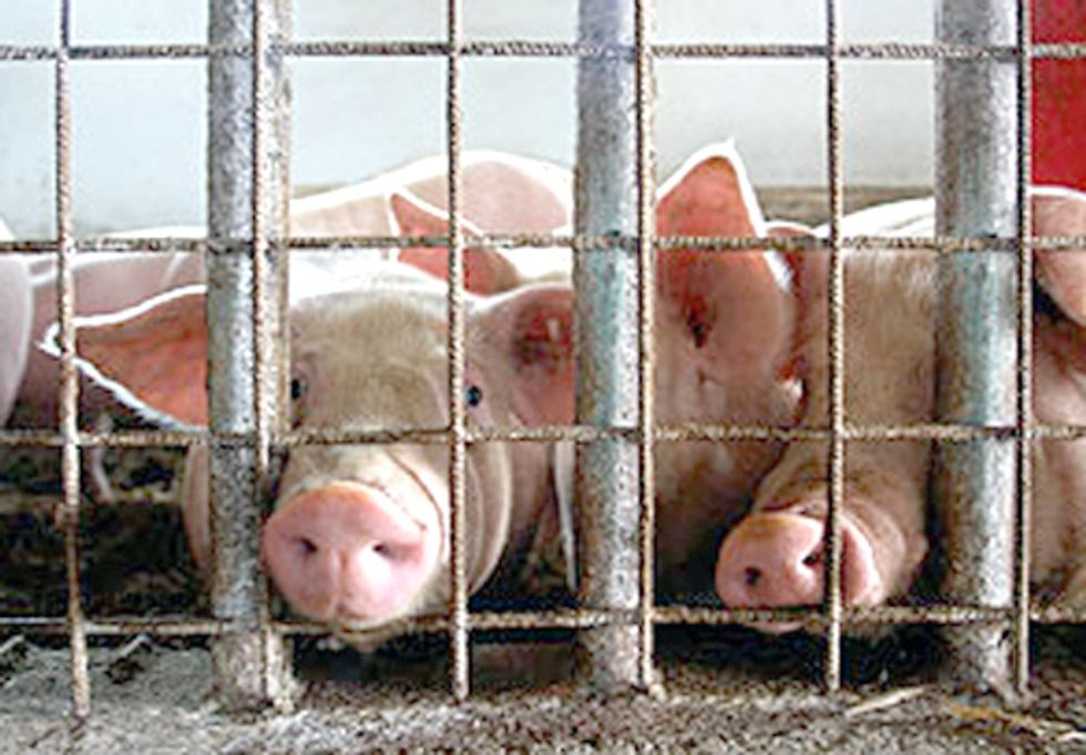 NY Environmental Groups Slam State's Decision to Exempt CAFOs from Clean Water Standards