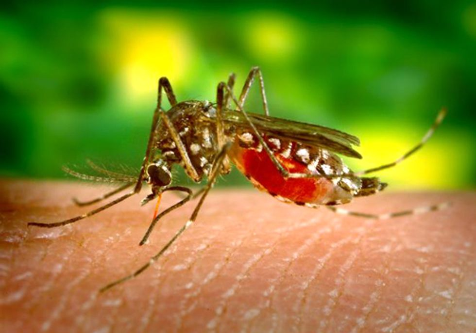 West Nile Virus Outbreak Linked to Climate Change