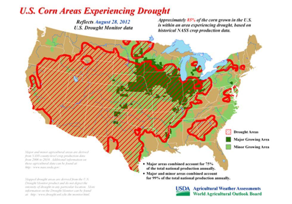 Drought Devastates U.S. Corn Crop, Spikes Worldwide Food Prices