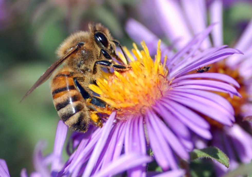 ACTION: Save the Honeybees