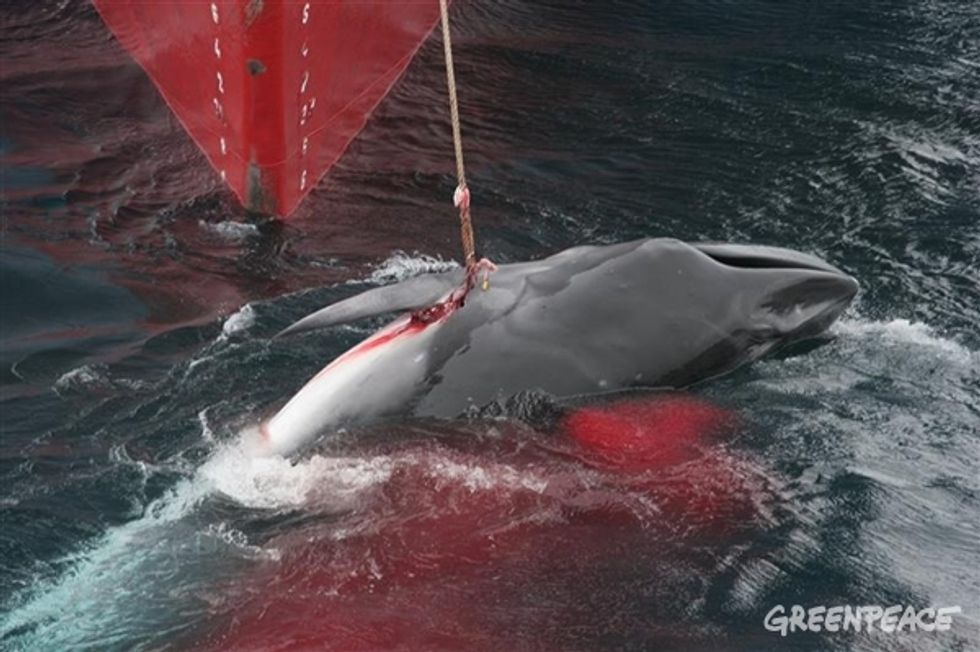Uncovering South Korea's Illegal Whaling Industry