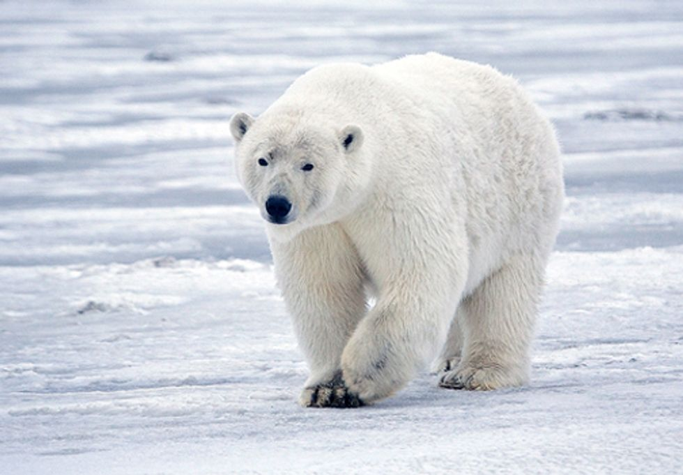 ACTION: Deadline Looms for U.S. to Help Ban Global Trade in Polar Bear Parts