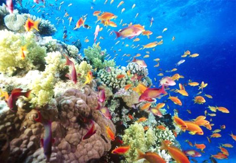 Think the Decline of the Great Barrier Reef is No Big Deal? Think Again