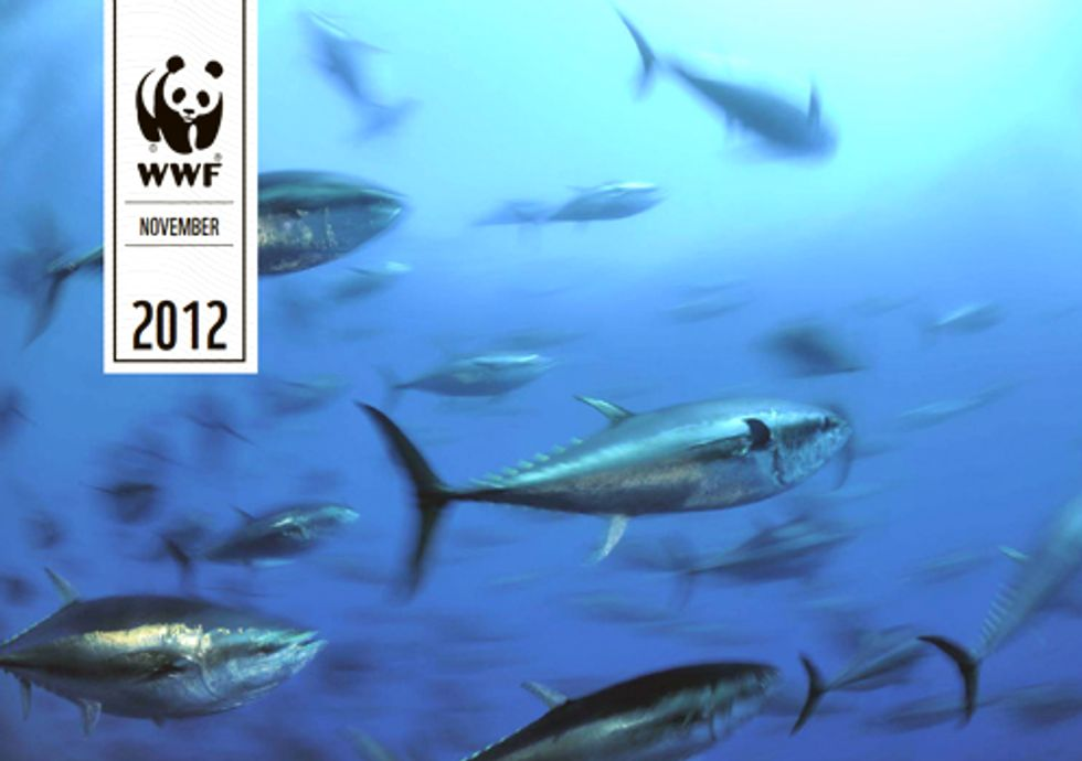 Massive Unreported Trade of Endangered Bluefin Tuna Exposed