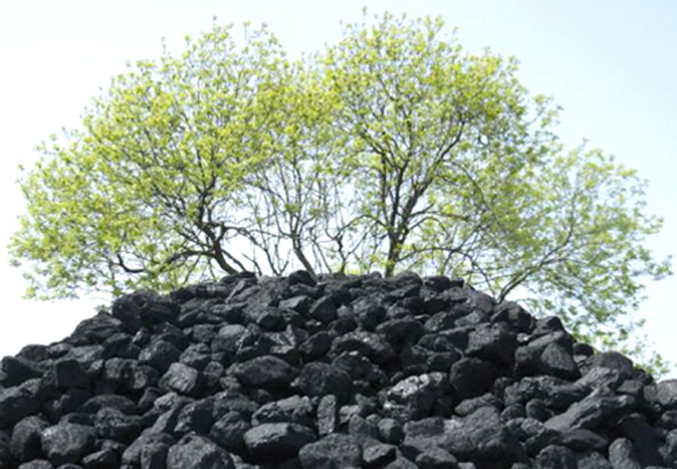Electricity from Trees Dirtier than Coal