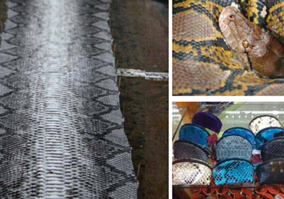 Fashion Industry Continues to Enable Unsustainable Trade of Wild Python Skins
