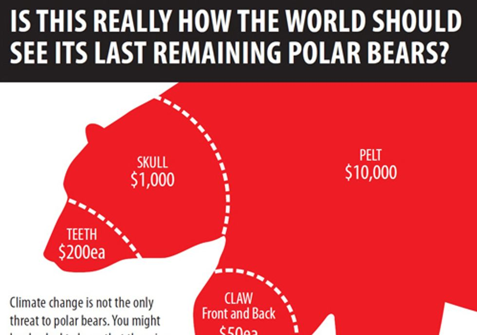 Stop the Killing of More Than 500 Polar Bears Each Year from International Trade in Fur and Parts