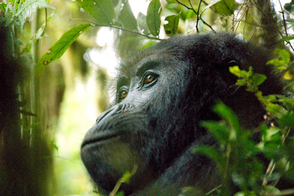 Fascinating Top 10 List from Conservation International