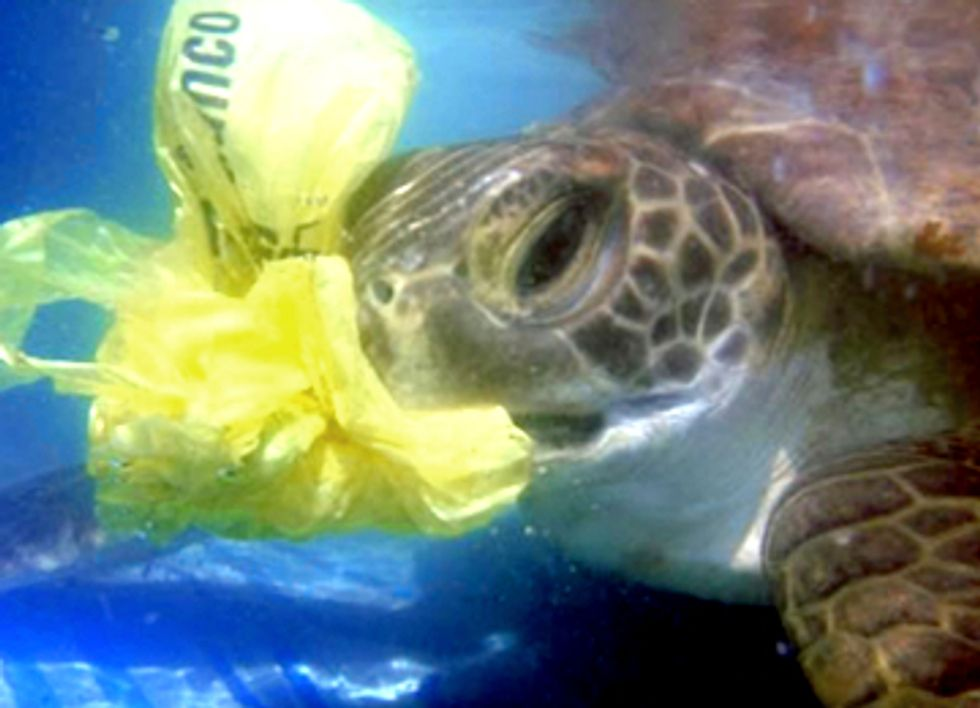 Silent Killers: The Danger of Plastic Bags to Marine Life