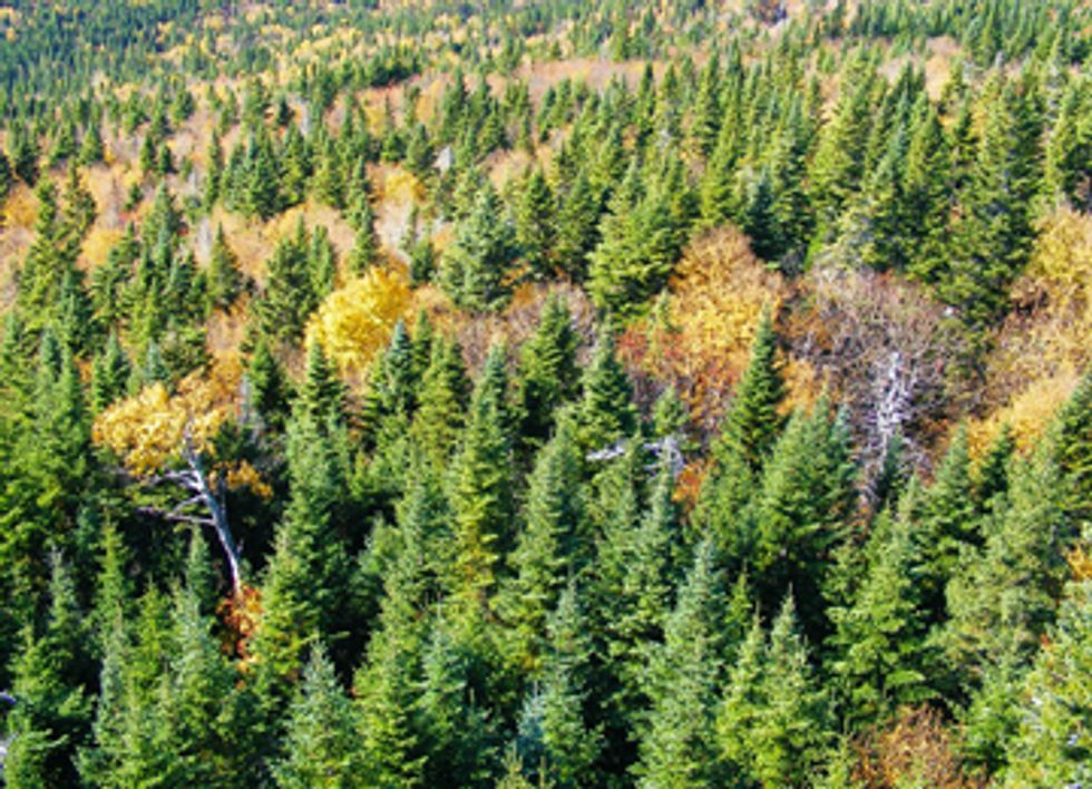 Forests Show Adaptations to Climate Change