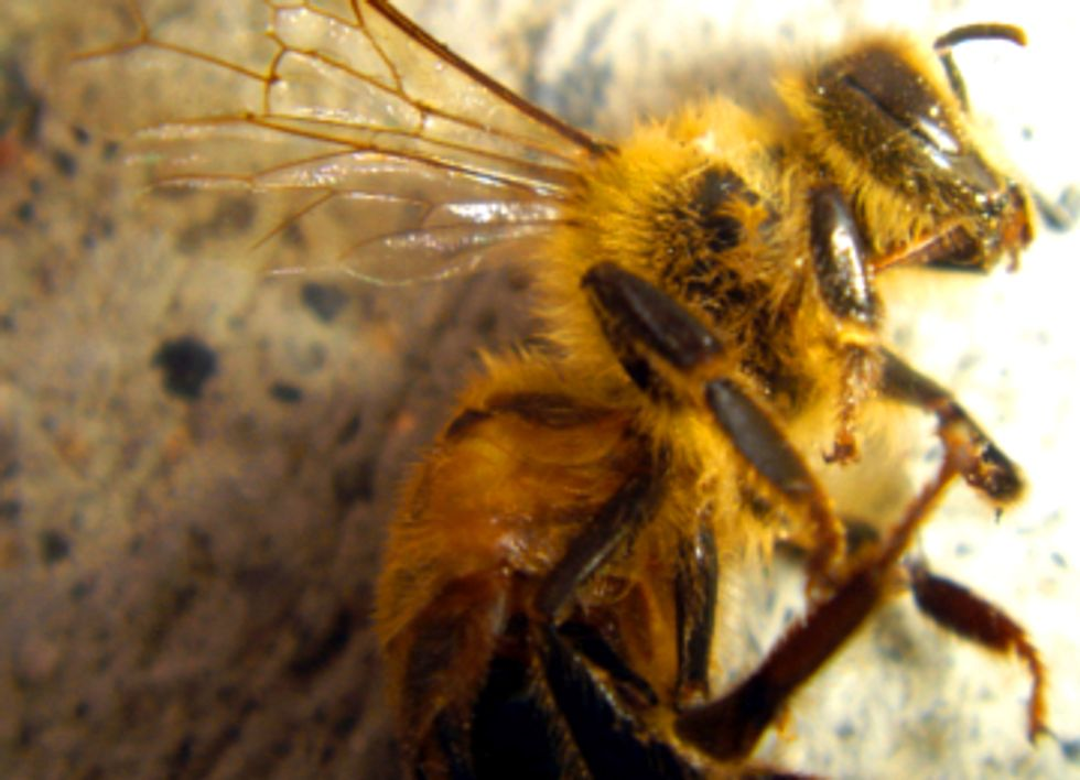 Pilot Study Finds Plants Sold As 'Bee Friendly' Pretreated With Pesticides