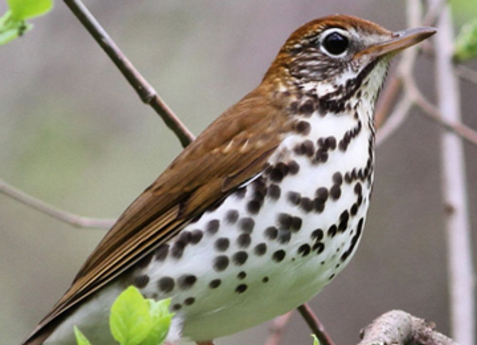 Five Types of Birds Your Grandchildren May Never See But Wish They Could