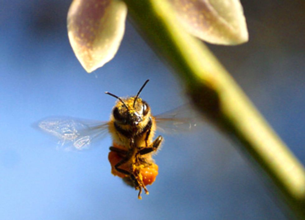EPA's New Pesticide Label Fails to Fully Protect Honey Bees