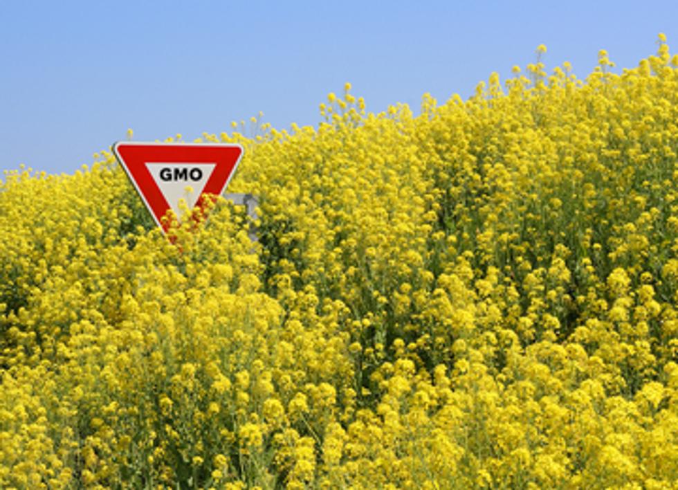 Oregon Governor Bans Canola Production Citing GMO Contamination Risks