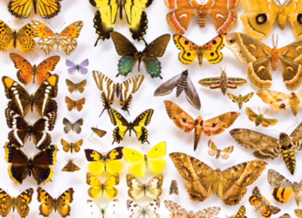 What Insects Can Tell Us About Climate Change