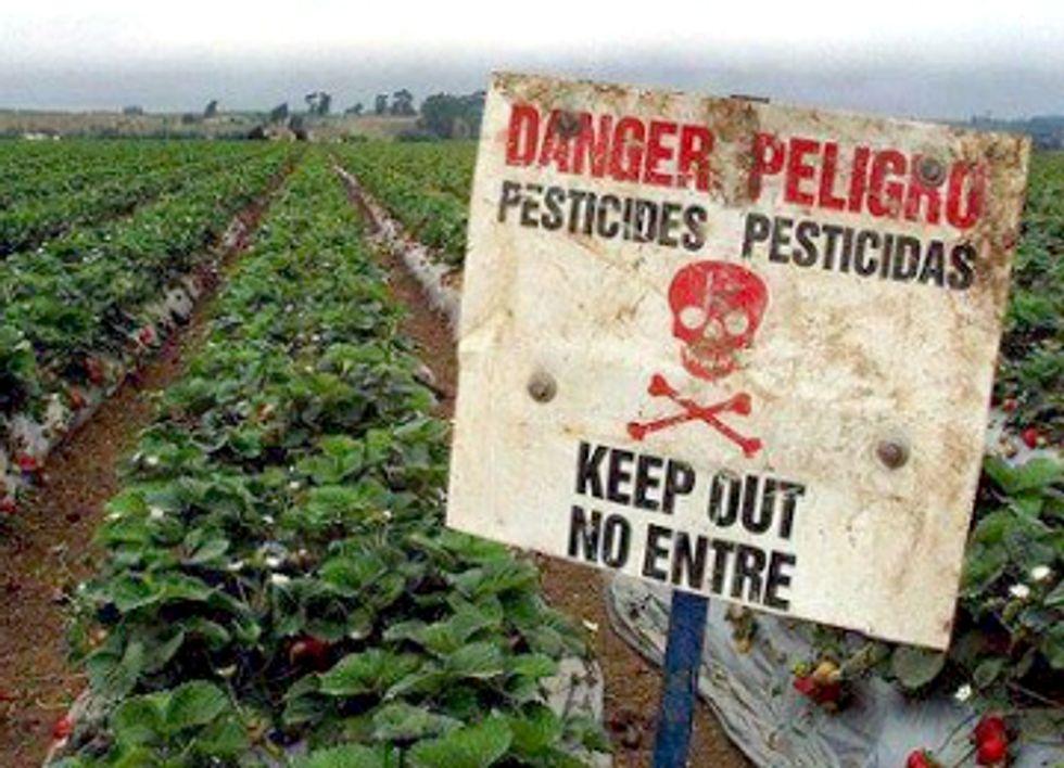 250 Groups Call on EPA to Ban Endocrine-Disrupting Atrazine