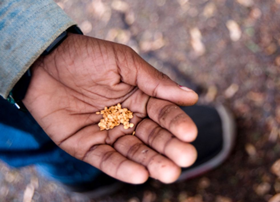 Seed Freedom, Not GMOs, the Answer to Malnutrition and Hunger