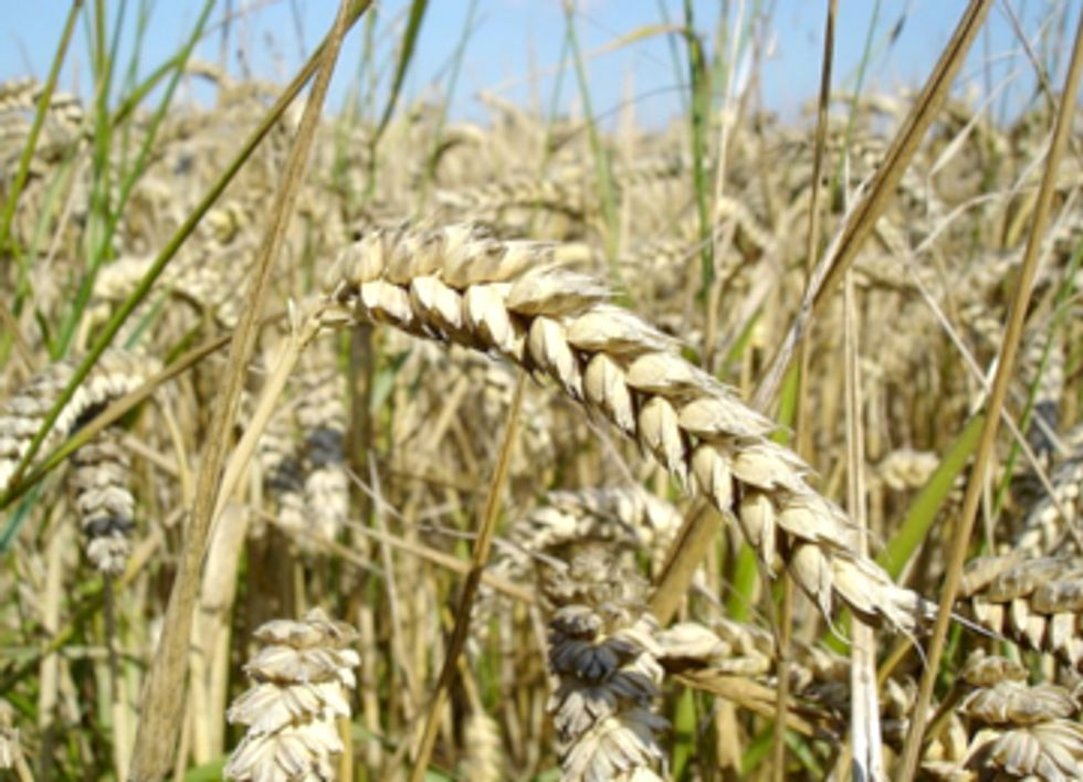 Crop Pests Move Polewards to Flee Warming Climate, Threaten Global Food Security