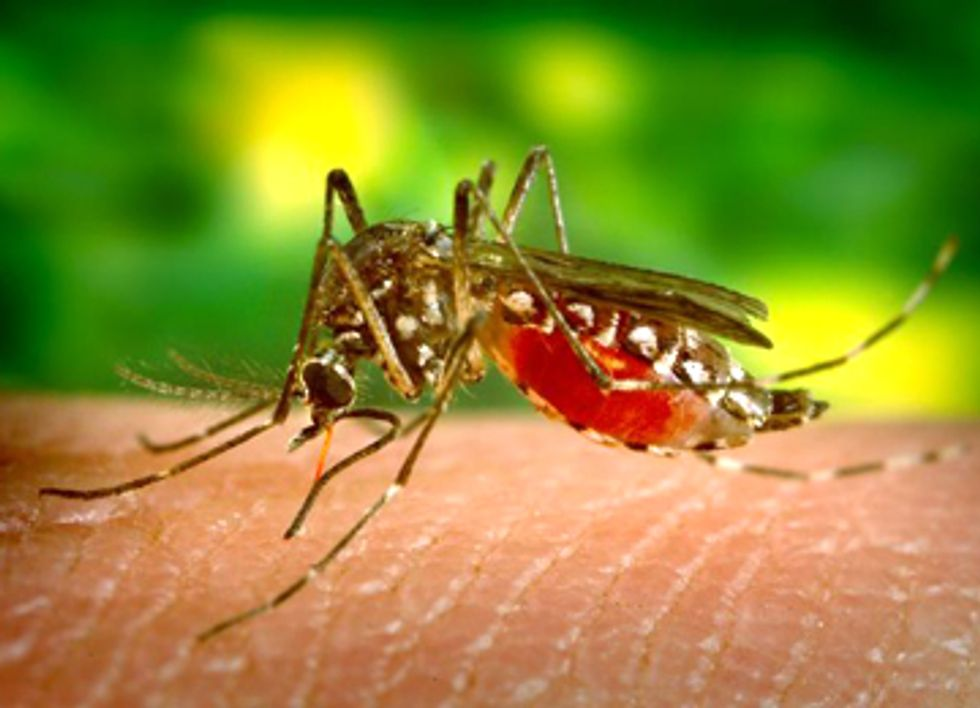 Mosquito Spraying Ineffective and Toxic to Wildlife and Humans
