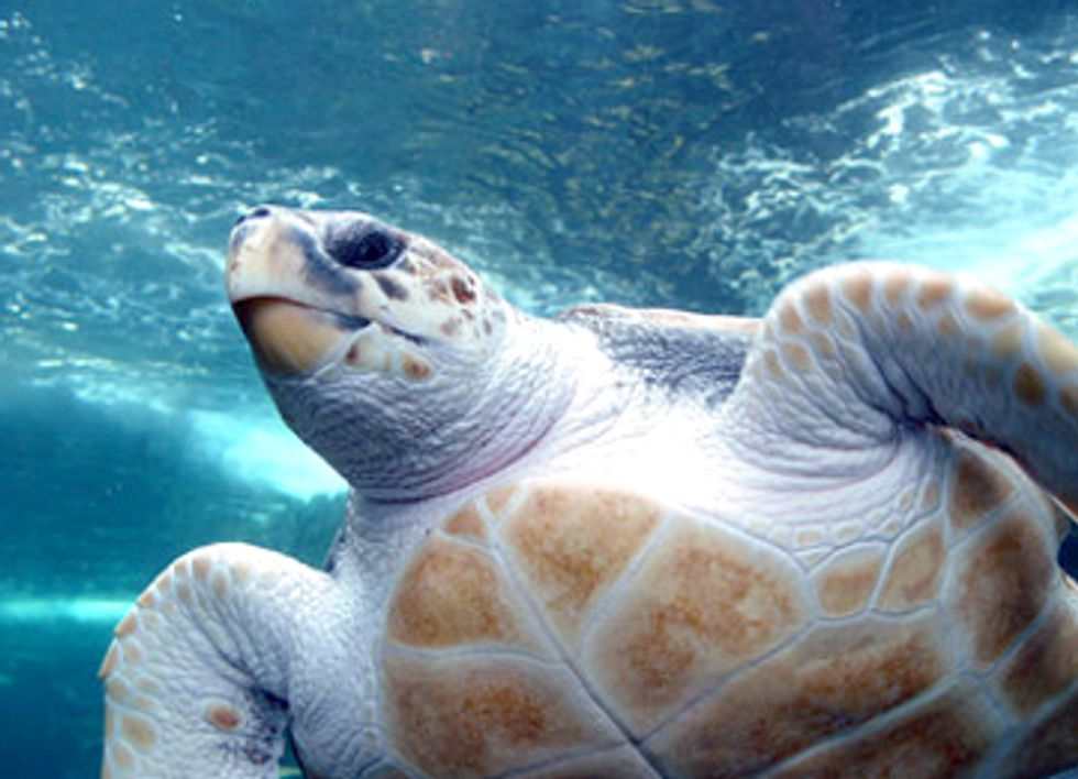 Mexico Risks U.S. Trade Embargo After Deaths of 700+ Endangered Sea Turtles